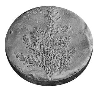 Médaille du prix Marie-Victorin 1978 créée par Bernard Chaudron